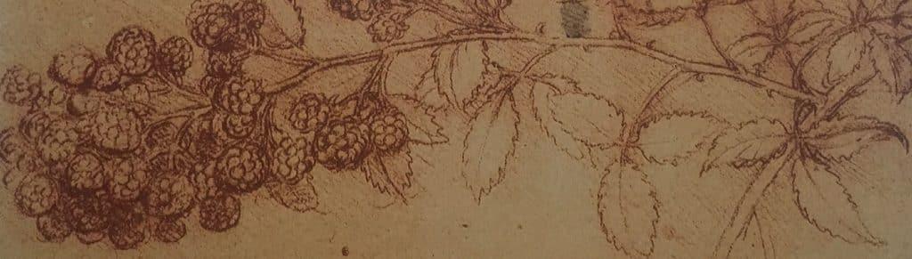 Branch of mulberris, Leonardo da Vinci, detail